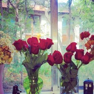 cropped-window.jpg
